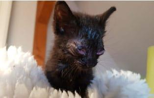 katzenbaby-weiblich-start-ins-leben-patenschaft Aktuelles aus den Tierheimen