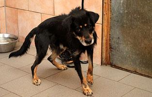 notfall-hund-h-177-19-maennlich 5 verlassene Hunde suchen Notfall Paten