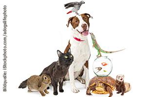 ratgeber-alle-tiere-artgerecht Artgerechte Haltung von Haustieren