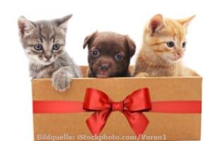 ratgeber-alle-tiere-weihnachten Kleintierratgeber