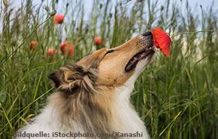 ratgeber-hunde-sinne Die Sinne des Hundes