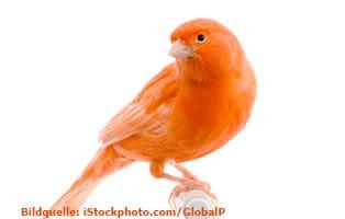 ratgeber-kleintiere-kanarienvogel-futter Kleintierratgeber