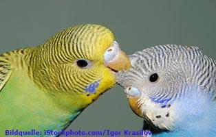 ratgeber-kleintiere-sittiche-vergesellschaftung Wildvögel ganzjährig füttern