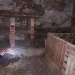 verwahrloste-hunde-befreit-buchten-150x150 5 verlassene Hunde suchen Notfall Paten