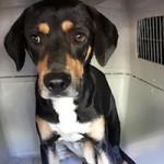 verwahrloste-hunde-befreit-hund-transportbox-schaut-150x150 5 verlassene Hunde suchen Notfall Paten