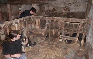 verwahrloste-hunde-befreit-stall 5 verlassene Hunde suchen Notfall Paten