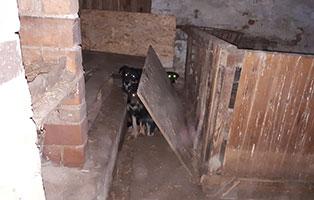verwahrloste-hunde-befreit-zuhause 5 verlassene Hunde suchen Notfall Paten