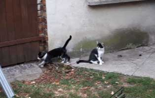 30-katzen-eingefangen-katzenhelden-vor-tuer 22 Katzen und 8 Hunde aus der Hölle befreit – Leiden für das schnelle Geld