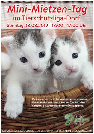 mini-mietzen-tag-mini Katzenkinderflut im Tierschutzligadorf – Einladung zum Mini-Miezen-Tag am 18.August 2019
