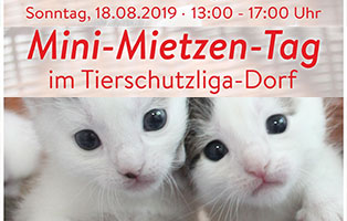 mini-mietzen-tag Unsere Tierheimtiere