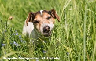 ratgeber-hunde-kraeuter Katzenratgeber