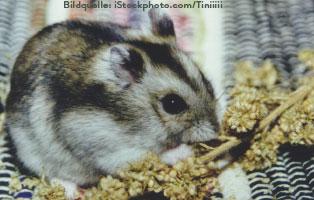 ratgeber-kleintiere-zwerghamster-futter Kleintierratgeber