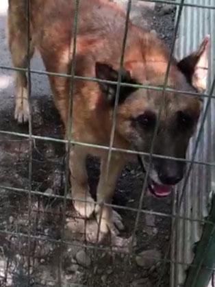 ungarisches tierheim hund kaefig traurig