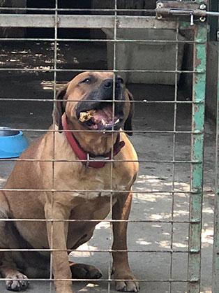 ungarisches tierheim hund kaefig