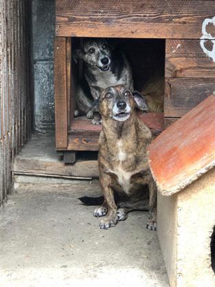 ungarisches tierheim hunde huette