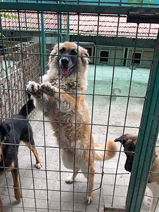 ungarisches tierheim hunde kaefig