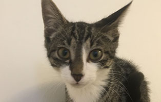 BK-127-maennlich 9 Katzenbabys aus Bückeburg suchen Start-ins-Leben Paten