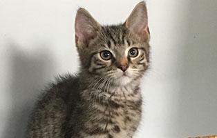 BK-130-maennlich Weitere 9 Katzenbabys aus Bückeburg suchen Start-ins-Leben Paten
