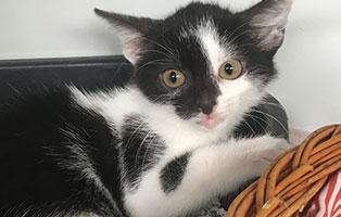 BK-131-weiblich Weitere 9 Katzenbabys aus Bückeburg suchen Start-ins-Leben Paten