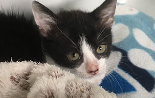 BK-132-weiblich Weitere 9 Katzenbabys aus Bückeburg suchen Start-ins-Leben Paten