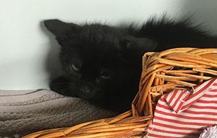 BK-134-weiblich Weitere 9 Katzenbabys aus Bückeburg suchen Start-ins-Leben Paten