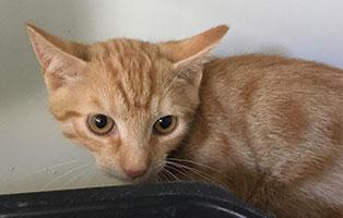 BK-142-weiblich 9 Katzenbabys aus Bückeburg suchen Start-ins-Leben Paten