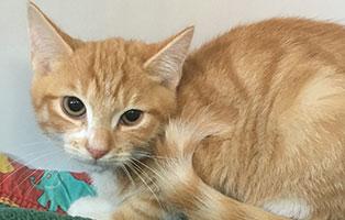 BK-143-weiblich 9 Katzenbabys aus Bückeburg suchen Start-ins-Leben Paten
