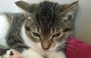 BK-149-weiblich 9 Katzenbabys aus Bückeburg suchen Start-ins-Leben Paten