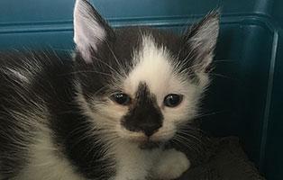 BK-153-maennlich Weitere 9 Katzenbabys aus Bückeburg suchen Start-ins-Leben Paten