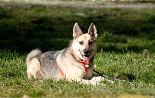 gluecklich-vermittelt-amira-SH013_19 Glücklich vermittelt - Tiere haben ein Zuhause