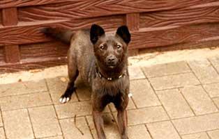 gluecklich-vermittelt-nori-SH013_19 Glücklich vermittelt - Tiere haben ein Zuhause