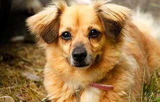 gluecklich-vermittelt-wilma-SH013_19 Glücklich vermittelt - Tiere haben ein Zuhause