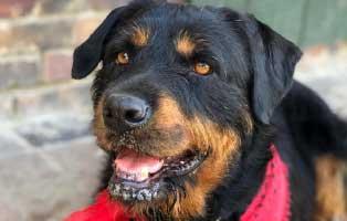 hund-barba Katzenelend - Wir brauchen Hilfe