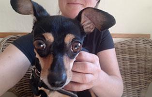 hund-henry-beinoperation-annett Notfellchen-Fonds