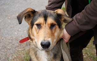 hund-hugo-rollieder-portrait Elliot - alter Tierschutzhund möchte sich verabschieden und bedanken