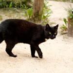 katze-mohrchen-verstorben-150x150 Katze Mohrchen