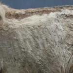 pony-klein-mogli-abgemagert-150x150 Mogli - Shetlandpony (TP002/19)