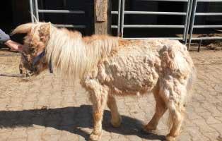 pony-klein-mogli-krank Hey, ich bin Geronimo - Streunerkatze in Not - Tierpatenschaft