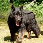 schaeferhund-charly-alt-gassi-150x150 Schäferhund Charly