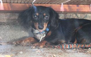 welpe-SH239-19-weiblich-tierschutzliga-dorf 13 Hunde aus dem Tierschutzliga-Dorf suchen Start-ins-Leben Paten