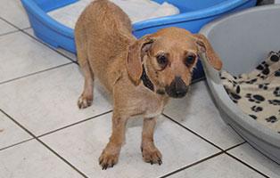 welpe-SH241-19-weiblich-tierschutzliga-dorf 13 Hunde aus dem Tierschutzliga-Dorf suchen Start-ins-Leben Paten