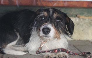 welpe-SH248-19-weiblich-tierschutzliga-dorf 13 Hunde aus dem Tierschutzliga-Dorf suchen Start-ins-Leben Paten