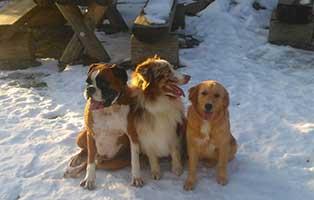frierende-tiere-drei-hunde Katzenelend - Wir brauchen Hilfe