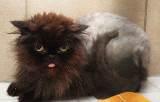 kater-griffi-patentier Knut (SH154/15)