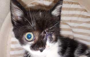 katzenbaby haengendes auge update