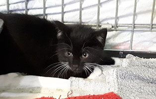 katzenbaby-kk634-19-maennlich-tierschutzliga-dorf 6 Katzenbabys aus dem Tierschutzliga-Dorf suchen Start-ins-Leben Paten