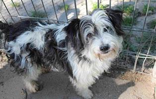 polenhund-ruede2-tierschutzliga-dorf Dolly aus der Smeura sucht einen Aufnahmepaten