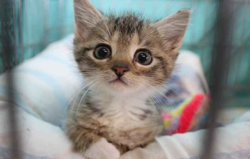 Katzenkind-sucht-warmes-zuhause Veranstaltungen - Tierschutzliga Dorf