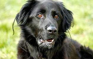 black-friday-hund-prinz Mickeys Weihnachtswunsch