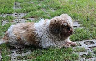 huendin-esmeralda-gluecklich-vermittelt Glücklich vermittelt - Tiere haben ein Zuhause